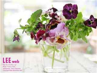 唯美花卉桌面壁紙 自(zi)然花卉圖片 花卉圖片
