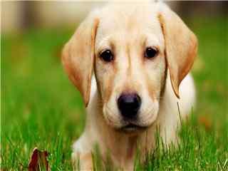 宠物狗可爱高清壁纸 宠物狗图片