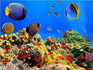 海洋生物高清桌面壁纸 海底世界图片