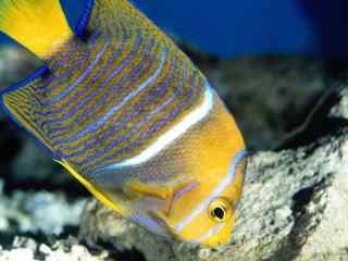 热带海洋动物图片 高清海洋动物壁纸