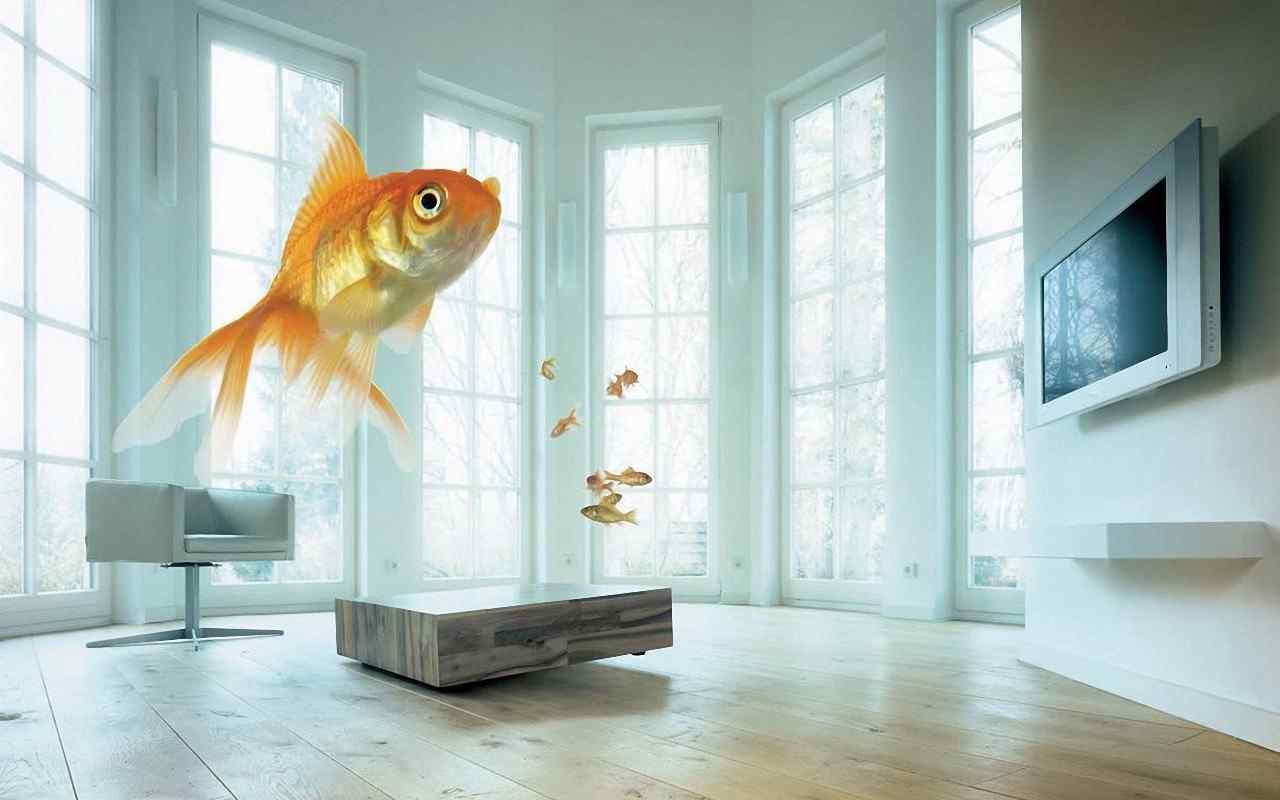 可爱金鱼电脑壁纸 热带金鱼壁纸 金鱼图片