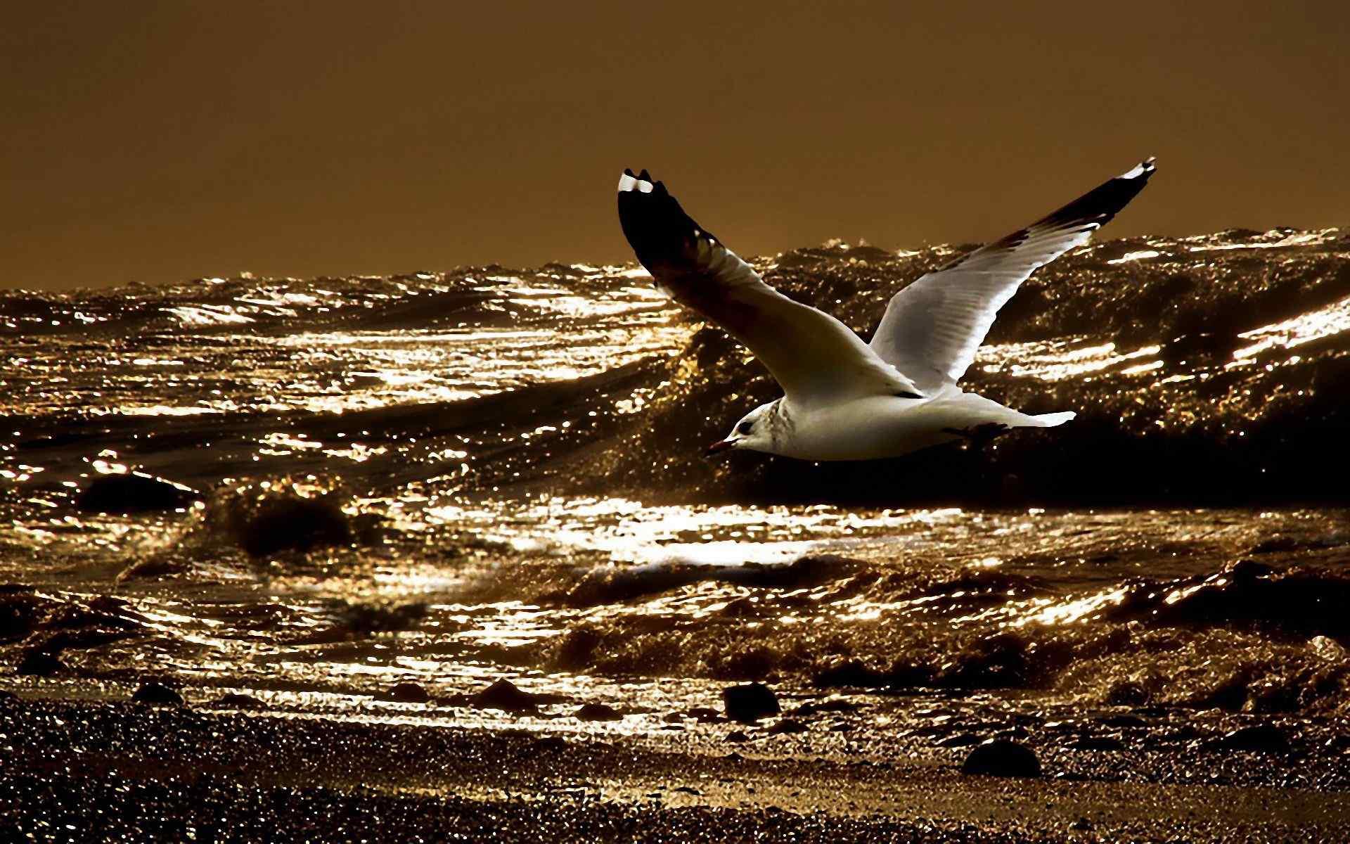 海边飞翔的海鸥唯美风景桌面高清壁纸 海鸥图片