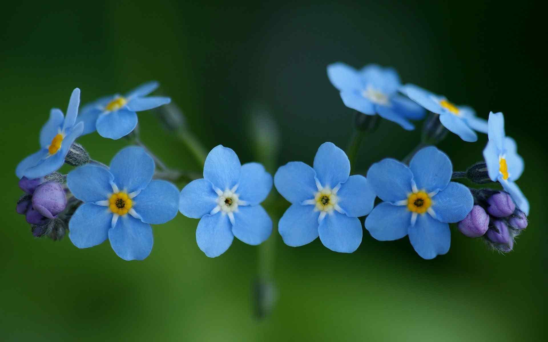 花中君子兰花素雅纯净高清壁纸 兰花图片
