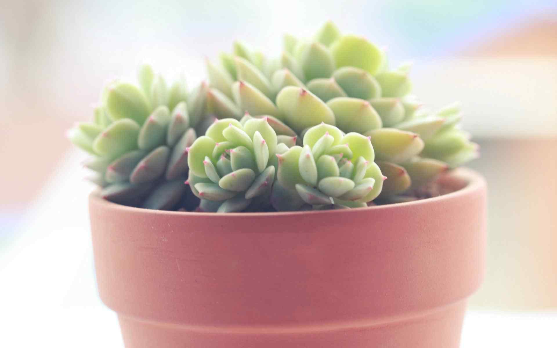 清新护眼绿色植物高清壁纸 小清新图片 护眼壁纸第二辑
