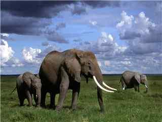 沙漠大象图片高清电脑桌面壁纸 大象图片
