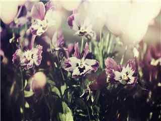 植物蝴蝶兰唯美高清桌面壁纸 蝴蝶兰图片