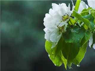 小清新綠色植物(wu)護眼電腦(nao)壁紙(zhi) 護眼壁紙(zhi)第一輯