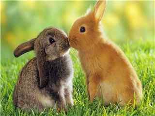 可爱的小兔子高清桌面壁纸 兔子图片