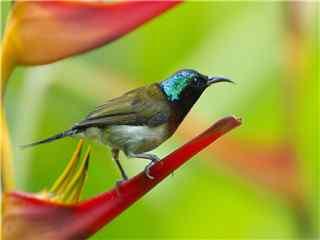 聪明可爱美丽的鸟类图片电脑桌面壁纸高清 鸟类图片