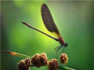 昆虫世界蜻蜓高清特写桌面壁纸 蜻蜓图片