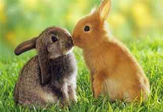 兔子壁纸_可爱兔子图片_小兔子图片_卡通兔子图片