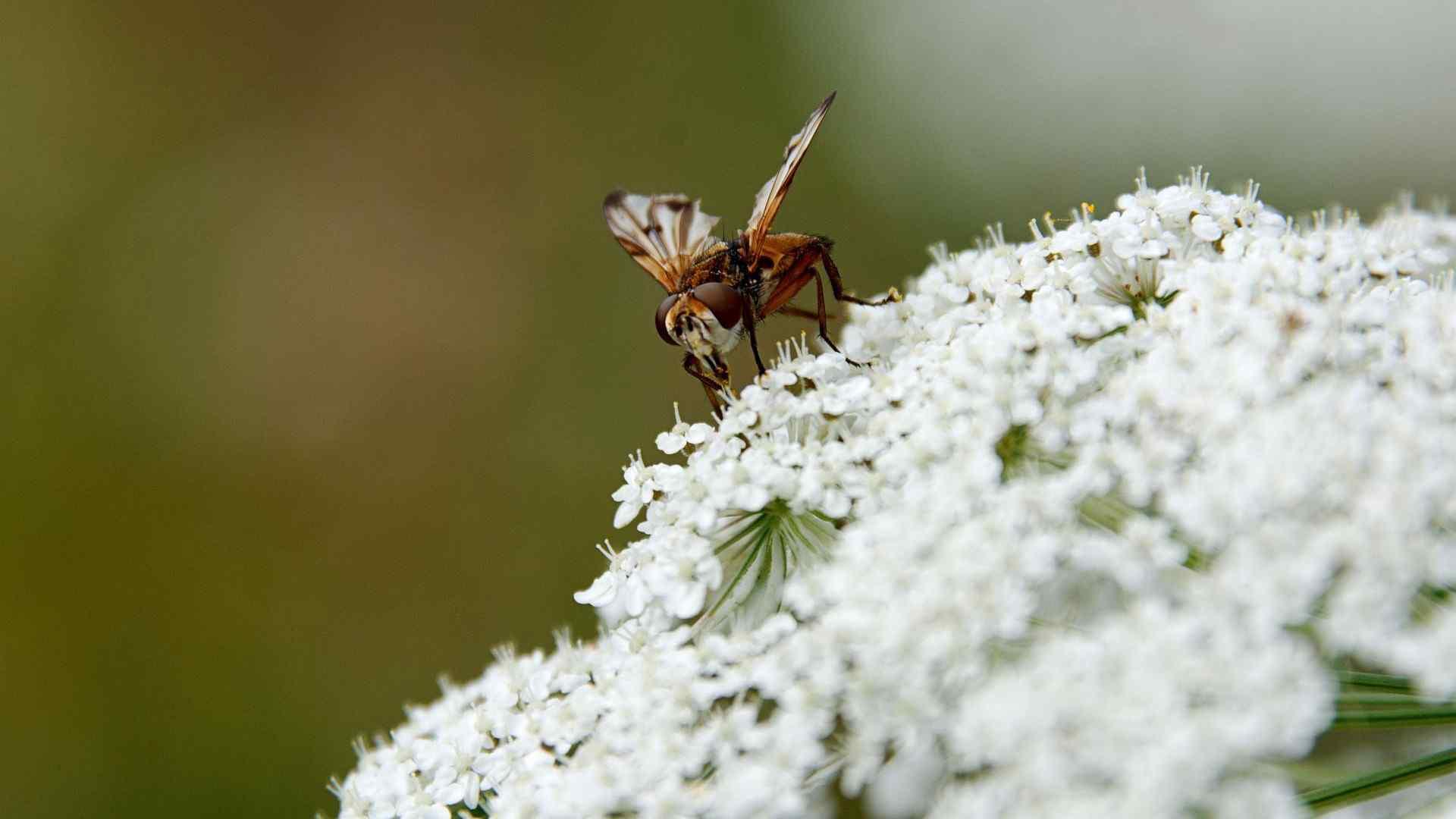 昆虫特写壁纸 昆虫图片 昆虫世界