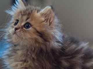 可爱猫咪手机壁纸 呆萌猫咪手机壁纸 猫咪图片