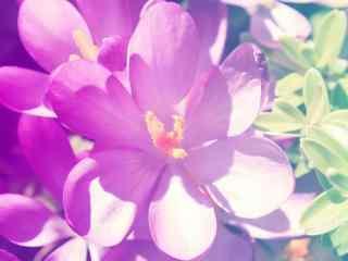 紫色花朵(duo) 紫色的花 紫色花朵(duo)圖片(pian) 紫色唯(wei)美花朵(duo)