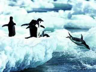 北极企鹅壁纸 冰川企鹅高清桌面 企鹅图片