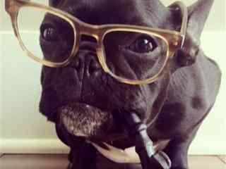 可爱狗狗手机壁纸 小狗手机壁纸 小狗图片
