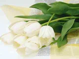 清新百合图片下载 高贵百合花图片 百合花桌面壁纸下载花语