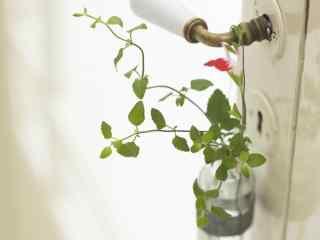 绿色护眼植物高清图 唯美护眼植物壁纸 大自然绿色植物桌面