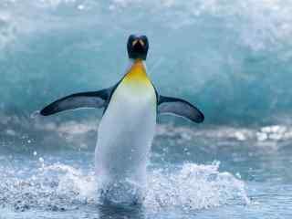 马达加斯加小企鹅图片 可爱企鹅桌面壁纸下载 精选企鹅图片高清桌面
