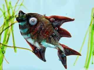小丑鱼桌面图片 海洋小丑鱼高清壁纸 海洋动物图片
