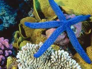 海底世界海星高清桌面图片 高清海底世界图片 海星桌面壁纸