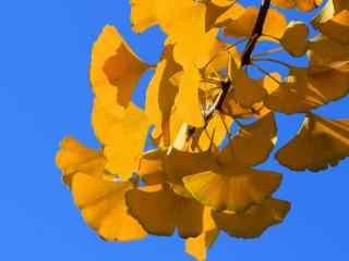 秋天风景的图片 秋天植物桌面壁纸 枯叶落叶高清壁纸