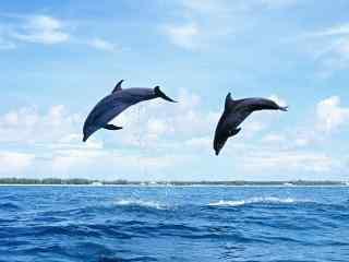 唯美摄影海豚壁纸 海底海豚摄影图片 海豚图片