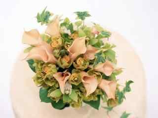 护眼清新小盆栽图片 绿色盆栽植物桌面壁纸 唯美盆栽图片