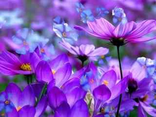 植物微距摄影高清壁纸 微距鲜花摄影桌面 微距花卉摄影特写