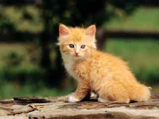 可爱小猫咪桌面壁纸 萌宠物喵星人高清壁纸