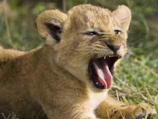可爱动物屏幕保护下载 萌宠动物屏保 动物屏保下载