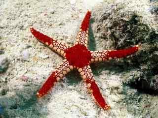 精选海洋生物图片合集 美丽的海底世界生物桌面壁纸