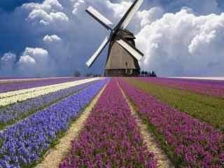 荷兰唯美自然景色 荷兰乡村风光桌面壁纸下载