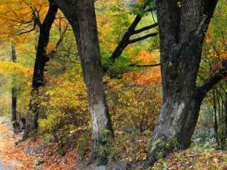 秋日红叶桌面壁纸 静秋纷飞红叶图片 红叶壁纸