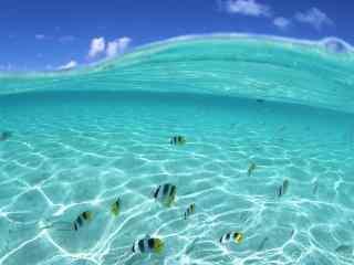 海洋热带鱼图片 热带鱼高清桌面壁纸  可爱热带鱼图片下载