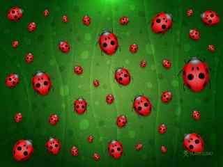 七星瓢虫图片下载 益虫瓢虫桌面壁纸 飞行的小虫图片