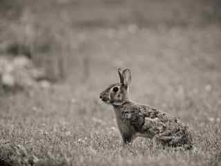 可爱小兔子桌面壁纸下载 高清兔子摄影壁纸 超萌兔子壁纸