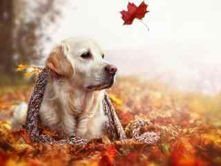 可爱宠物狗高清壁纸 宠物狗写真摄影壁纸 宠物狗图片