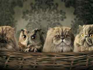 貓頭鷹攝影壁紙 唯美(mei)貓頭鷹桌面壁紙 貓頭鷹圖片