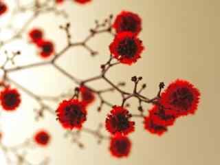 红色花朵图片 鲜花图片桌面壁纸 红色花朵壁纸