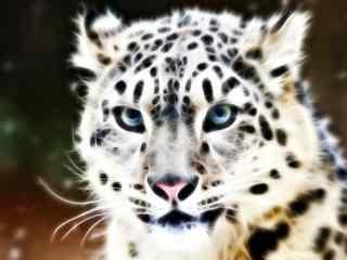 金钱豹子图片_金钱豹图片大全_斑纹凶猛豹子壁纸下载