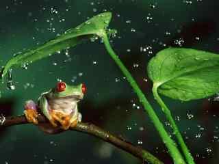 益虫青蛙图片_池塘里的青蛙壁纸_大自然水中青蛙图片
