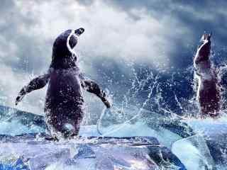 企鹅图片_企鹅家族桌面壁纸_冰川企鹅行走图片