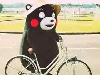 熊本熊_日本熊本熊_熊本熊表情包_熊本熊图片_熊本熊壁纸