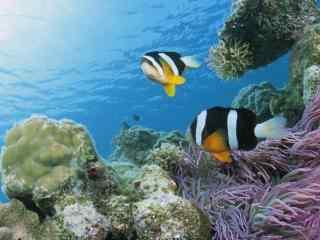 海底两万里_海底世界_海洋生物_海底大鲨鱼壁纸