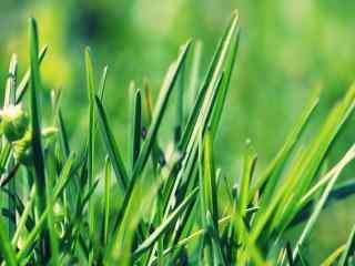 绿色环保植物_绿色护眼植物_清新绿色盆栽植物壁纸