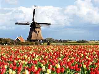荷兰_荷兰花卉小镇_荷兰风车、郁金香_阿姆斯特丹_荷兰风景壁纸