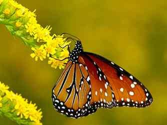 蝴蝶_蝴蝶图片_美丽的蝴蝶_花蝴蝶_美丽的蝴蝶动物壁纸