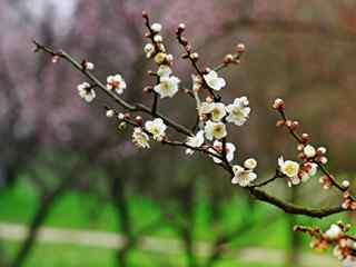冬天(tian)開的(de)花_鮮花桌面壁紙_鮮花壁紙_鮮花植物壁紙