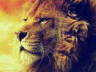 狮子_狮子图片_小狮子图片_狮子桌面壁纸_狮子手机壁纸_狮子动物壁纸